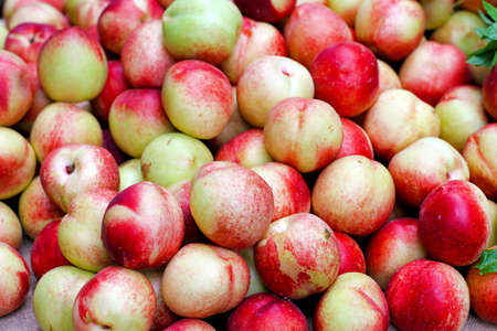 Big pile of fresh organically grown nectarines Stock Photo - 17123486