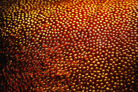 Close up shot of abstract gold texture Stock Photo - 17191498