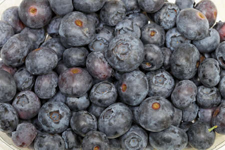Big bunch of fresh and natural blueberries Stock Photo - 17690582