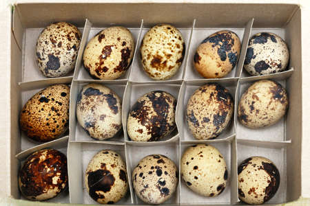 Japanese cuisine delicacy organic quail eggs in box Stock Photo - 17690581