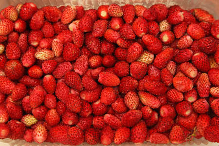 Big bunch of natural wild red strawberries Stock Photo - 17690577