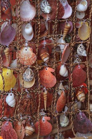 Sea shells clams and scallops sealife decoration Stock Photo - 18397860