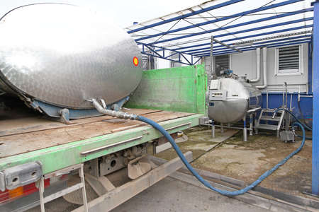 milk production: Unloading raw milk from tanker in dairy factory