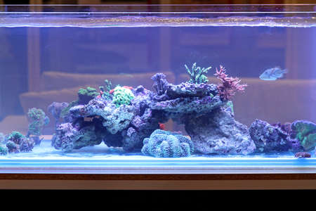 Large fish tank with tropical coral reef