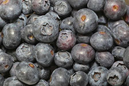 Big bunch of fresh and organic blueberries Stock Photo - 19263897