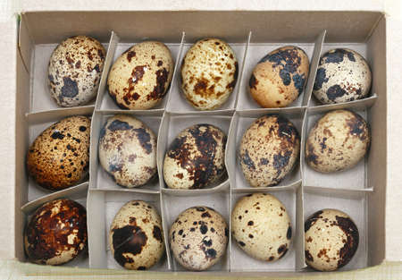 Japanese cuisine delicacy quail eggs in the box Stock Photo - 19263903
