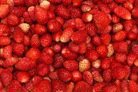 Big bunch of organic wild red strawberries Stock Photo - 19263898