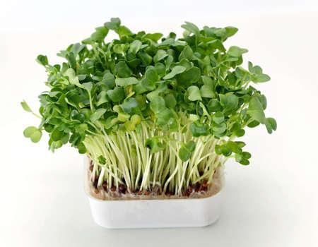 냄비에 신선한 식용 건강한 녹색 물냉이