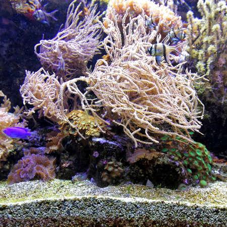 Tropical Coral Reef in Salt Water Aquarium Stock Photo