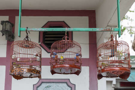 Song Birds in Vintage Cages Outside Stock Photo