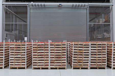 Crates of Tomatoes at Pallets in Warehouse