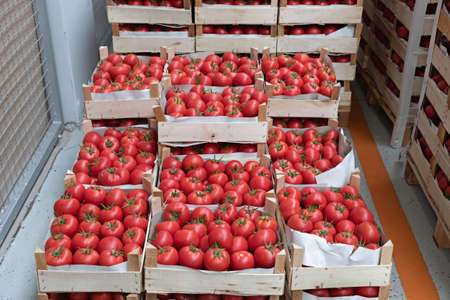 Crates of Red Tomatoes in Warehouse Storage