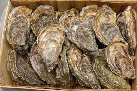 Bunch of Fresh Oysters in Wood Crate Seafood