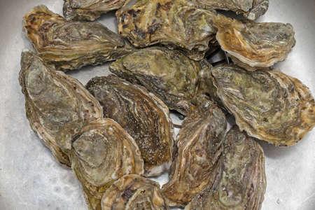 Big Bunch of Fresh Oysters Seafood 版權商用圖片