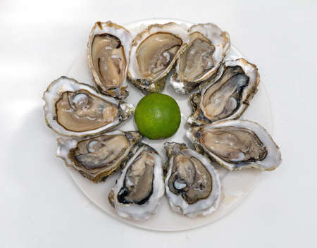 Served Opened Fresh Oysters Seafood at Plate 版權商用圖片