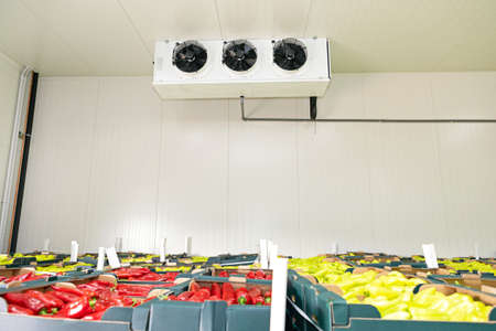 Peppers Vegetables in Boxes in Distribution Warehouse Foto de archivo