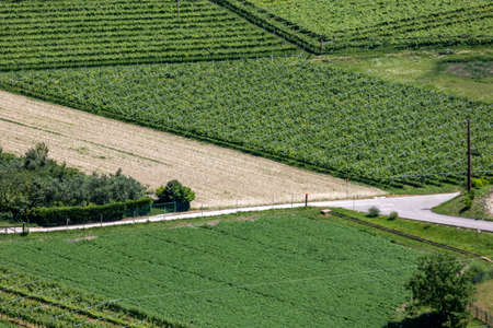 Aerial View of Green Gardens Vegetables FIelds in Italy