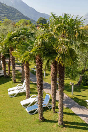Tall Palm Trees in Garden With Beach Chairs