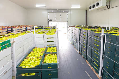 Peppers and Apples in Crates Storage Warehouse