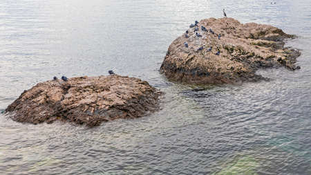 Birds at Two Small Islands in Adriatic Sea