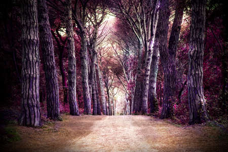 Path in forest. Somewhere in magic wood
