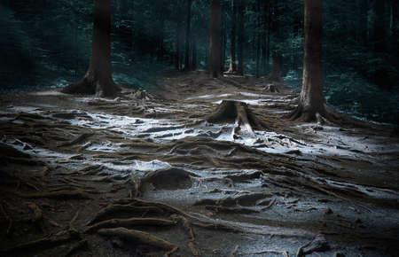 somewhere: Dark glade. Somewhere in mystic wood