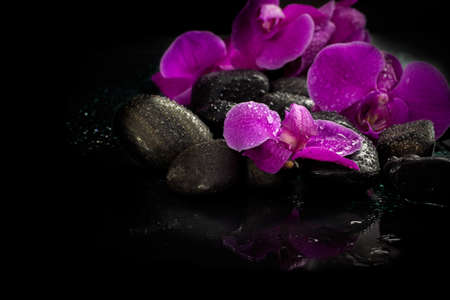 Spa concept of violet orchid on stones with drops Stock Photo
