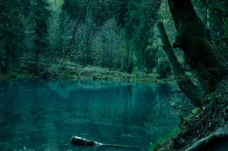 enchant: Magical pond in mysterious forest. Stock Photo