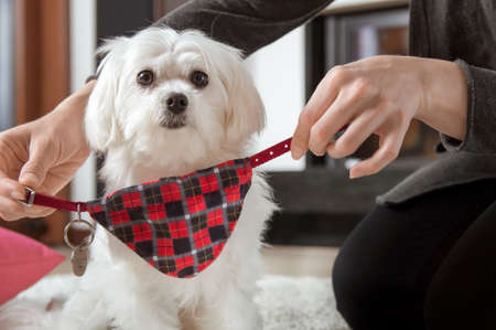 Woman is wearing a dog collar with an identifier Stock Photo