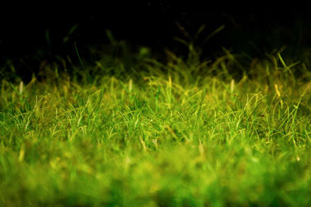 Magical looking grass on the black background