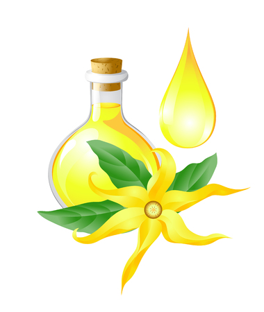 phial: Ylang ylang flower drop and a bottle of oil of ylang Illustration
