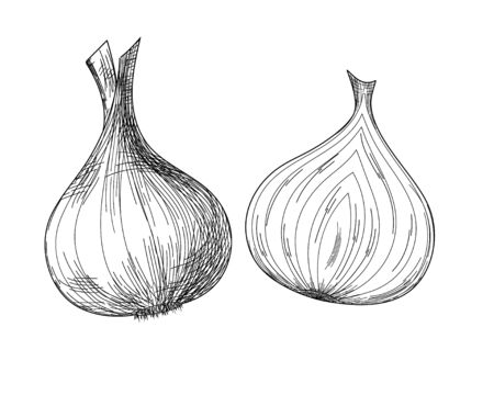 Onion and onion in a cut in his contour style