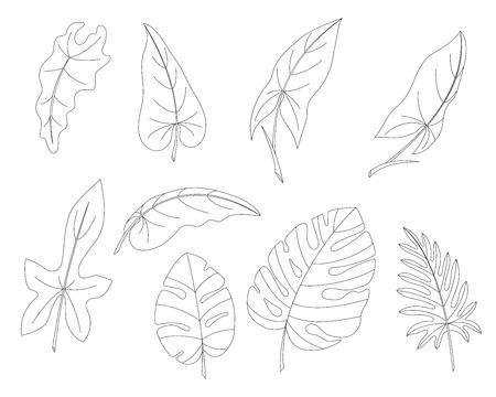 Les feuilles des arbres et des lianes tropicales définissent le vecteur. Un circuit isolé Banque d'images - 87707343