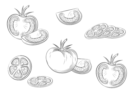 Tomatoes. Engraving vintage vector illustration.Isolated black outline. Vector EPS 10 Illustration