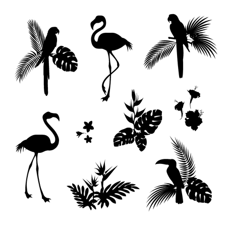 Flamingos and Parrots silhouette vector illustration set