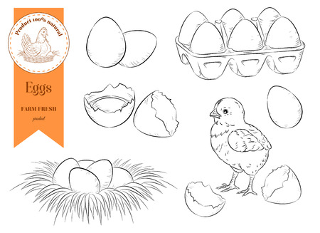 Set chicken eggs and chicken. Farm organic product. Isolated circuit. Vector illustration