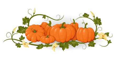 Pumpkins. Set orange vegetable pumpkins. Isolated vegetable, leaves, flower. Template   invitations, congratulations, happy Thanksgiving, harvest festival, autumn poster design. Vector illustration Çizim