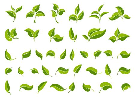 Leaf icons set. Set  green leaves design elements. Various shapes  leaves  trees and plants. Concept environmental conservation, nature protection, ecology. Isolation. Vector illustration