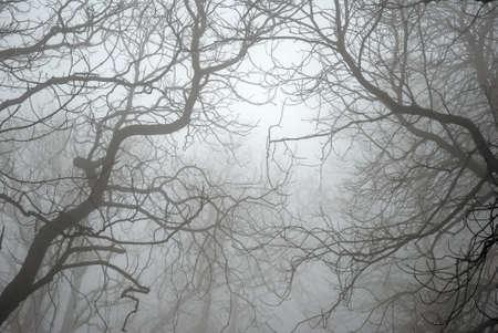 жуткий: Голые ветви деревьев в тумане