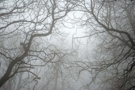eerie: Bare Tree Branches in the Fog Stock Photo