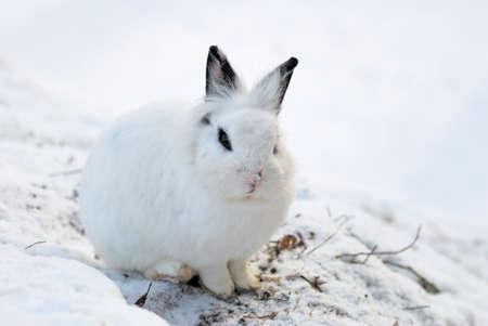 Cute White Bunny Stock Photo