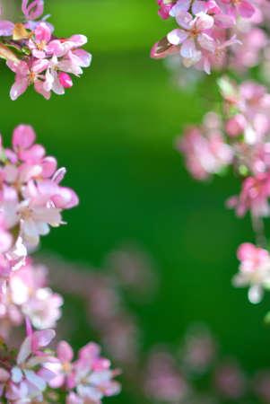 Pink Flower framing photo