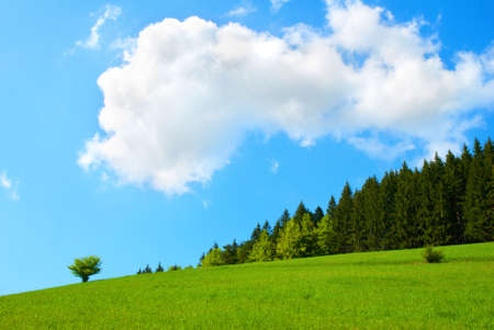 Green Tree in Field and Blue Sky with White Clouds photo