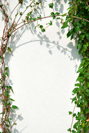 Ivy Frame and White Wall photo