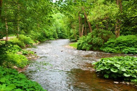 Small Clean River and Green Overgrown River Banks Stock Photo