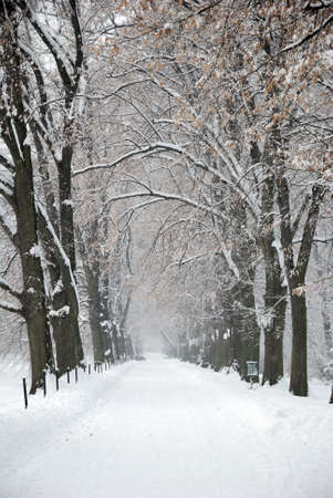Snow Covered Winter Path under Trees photo