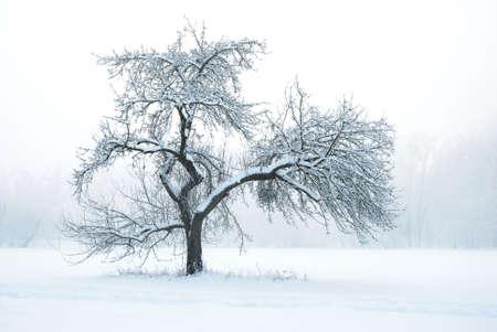 deep freeze: Apple Tree bajo la nieve en invierno Foto de archivo