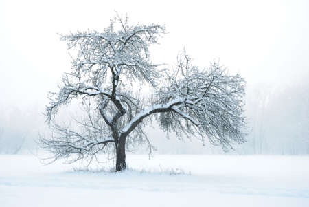 Apple Tree under Snow in Winter Stock Photo