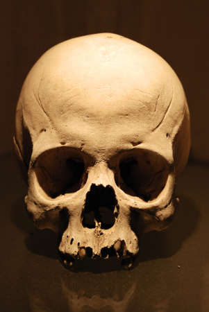 Human skull without the jaw photographed in a museum.