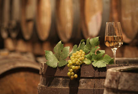 white wine: Wine Grapes in a Wine Cellar